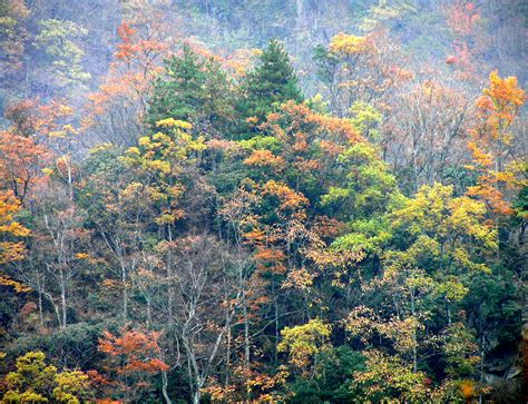 News: Managing Forests