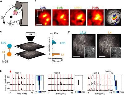 Frontiers   Neuronal Avalanches in Input and Associative