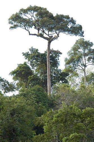 10 Interesting the Tropical Dry Forest Facts - My